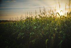 Farm Insurance in Owatonna, MN